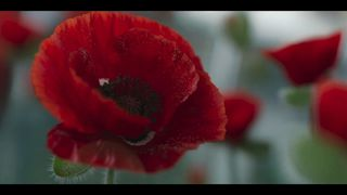 This year's appeal is based on the poem Flanders Field