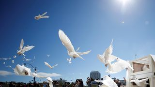 Doves are released for each victim of the Route 91 Harvest music festival mass shooting at City Hall plaza in Las Vegas, Nevada