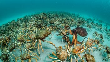 Crab surprise by Justin Gilligan, winner of the Behaviour: Invertebrates category