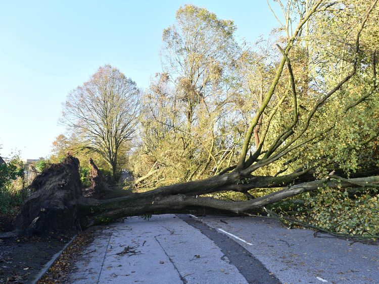 A tree felled by Storm Ophelia in Cork