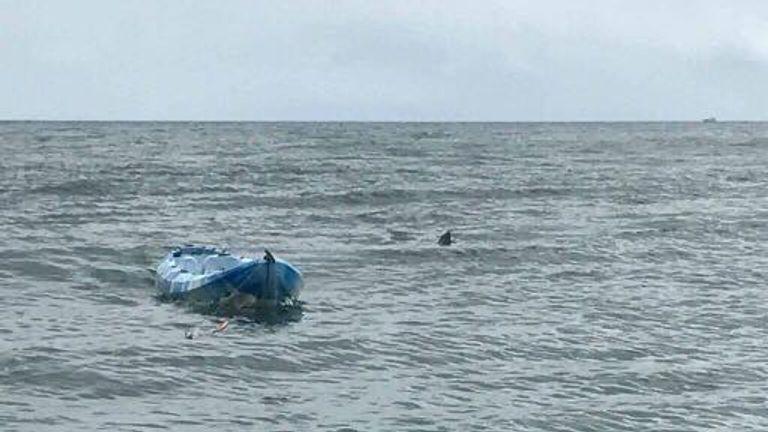The shark's dorsal fin can be seen as it circle's Sarah's kayak