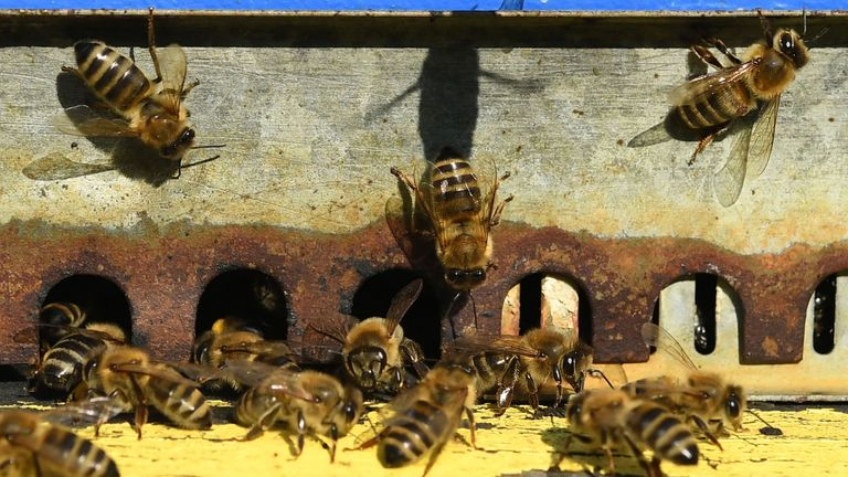 The chemicals are toxic to honey bees