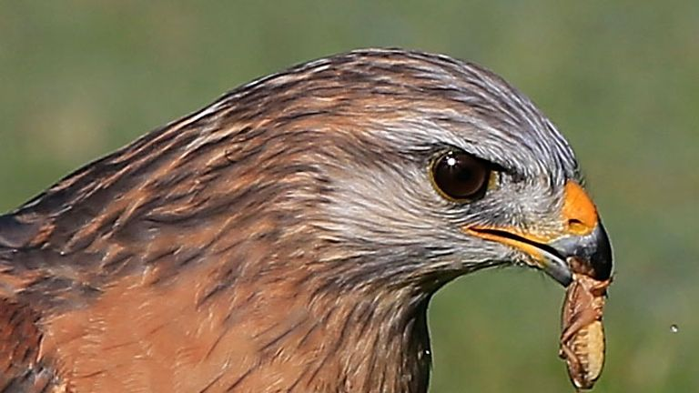Insects provide food for birds such as hawks, as well as being pollinators