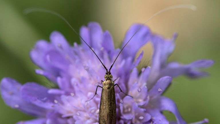 Most insect species globally are showing dramatic reductions in population levels