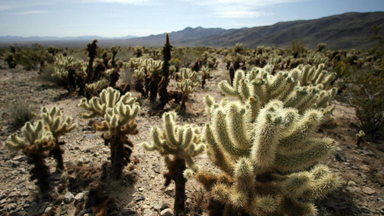 In July, temperatures in Joshua Tree National Park reach up to 40.5C