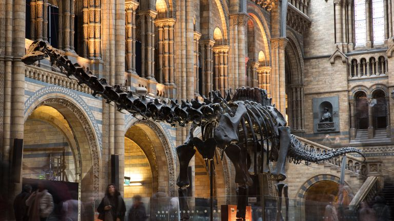 Dippy the Diplodocus was removed from the Natural History Museum in early 2017 but curators know where he is, unlike hundreds of other artefacts.