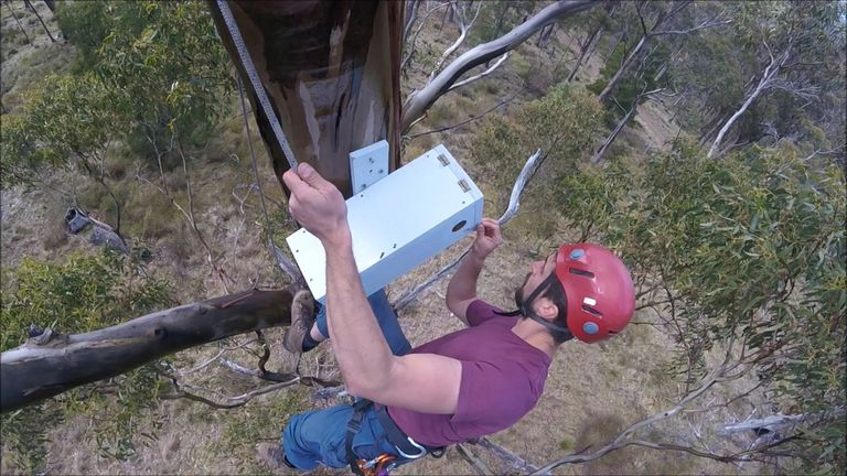 Scientists have installed nest boxes to protect the parrots during the night. Pic: ANU