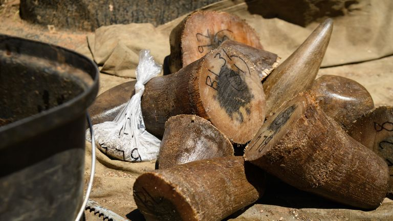 Some rhino horns can be sold on the black market for tens of thousands of pounds