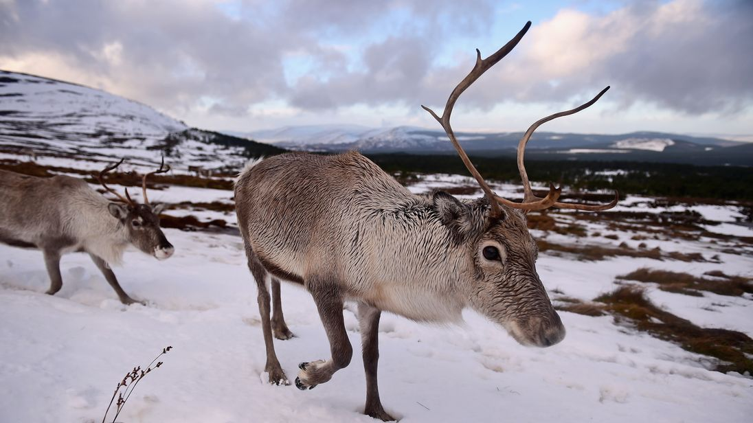 Over 100 reindeer were killed over just three days