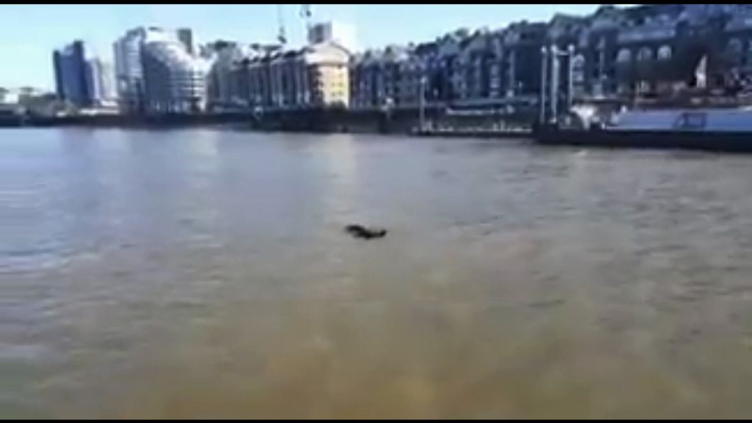 A Met Police marine unit has filmed a dolphin swimming in the Thames.