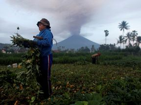 Farmers tend their crops as Mount Agung erupts in the background in Amed
