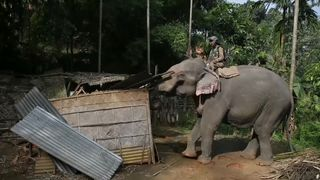 Indian police using elephants to try to evict hundreds of people living illegally in a protected forest area