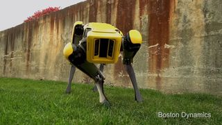 The upgraded Spot Mini robot leers at the camera. Pic: Boston Dynamics