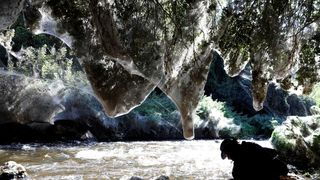 Igor Armicach, a doctoral student at Hebrew University's Arachnid Collection, looks onto giant webs, spun by long-jawed spiders at Soreq creek near Jerusalem