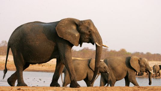 A herd of elephants in Hwange National Park, Zimbabwe