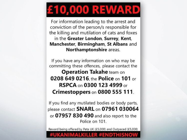 Reward of £10,000 offered to catch cat killer