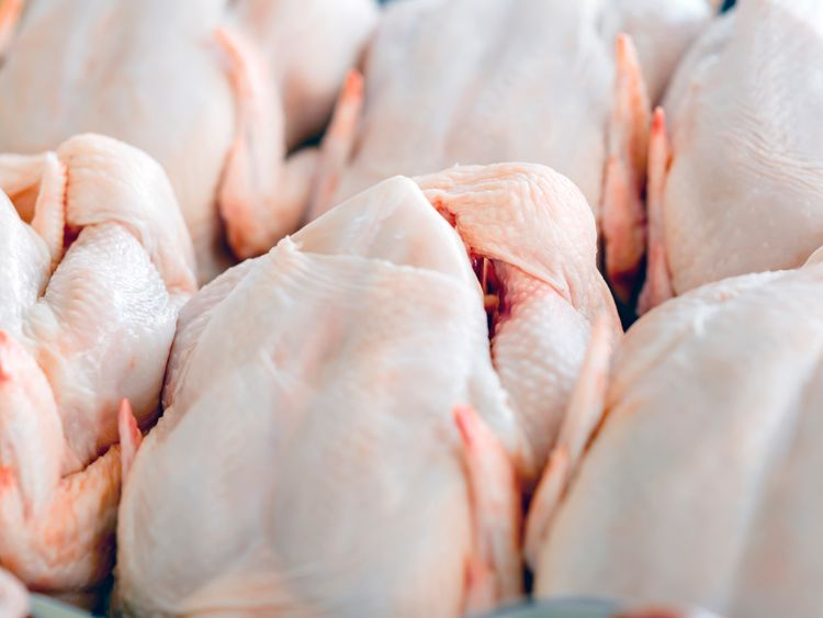 Raw  butchered chicken in queue
