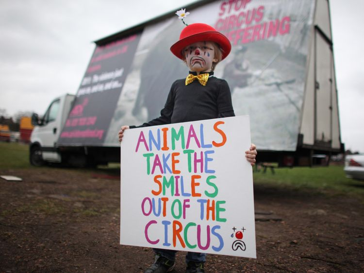 The majority - 94.5% - of the British public want a wild animal circus ban, a government survey found