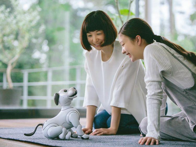 robot dog 1