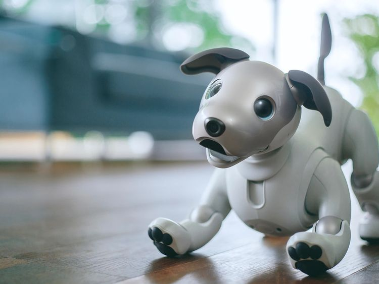 Spot the dog: New robo pup able to 'show love'