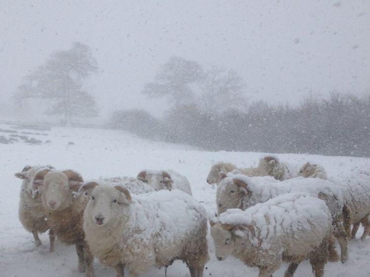Sheep on a farm in Highfarndale Pic: Peter @HighFarndale