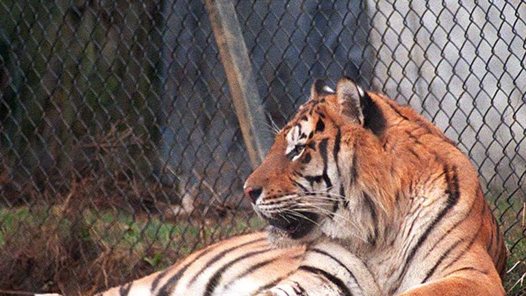David Cameron pledged to ban wild animals in circuses in 2010