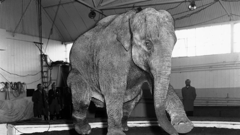 The Chipperfield family has used wild animals in circuses for 300-years, with the last show using lions and tigers in early 2017