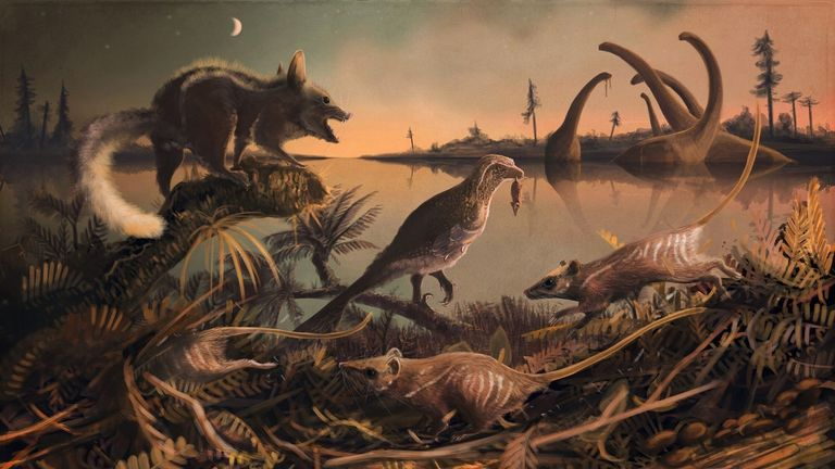 The animals are believed to be from the Cretaceous period