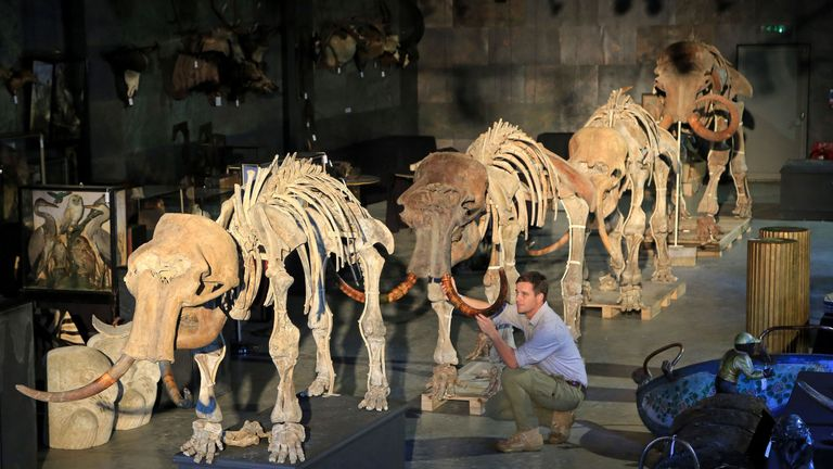 The family of four mammoths on sale in Sussex