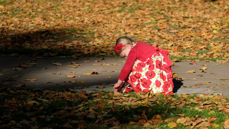 RTS1JKVU12 Nov. 2017Loughborough, United KingdomA girl collects fallen poppies after the Remembrance Sunday ceremony in Loughborough, Britain November 12, 2017. REUTERS/Darren Staples