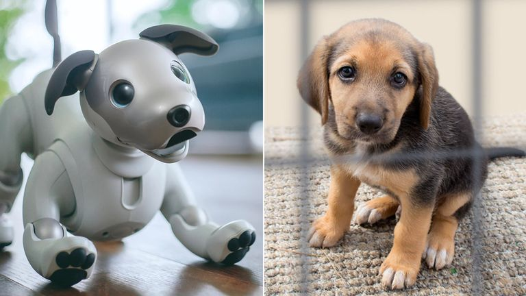 Aibo could be cheaper than a real dog