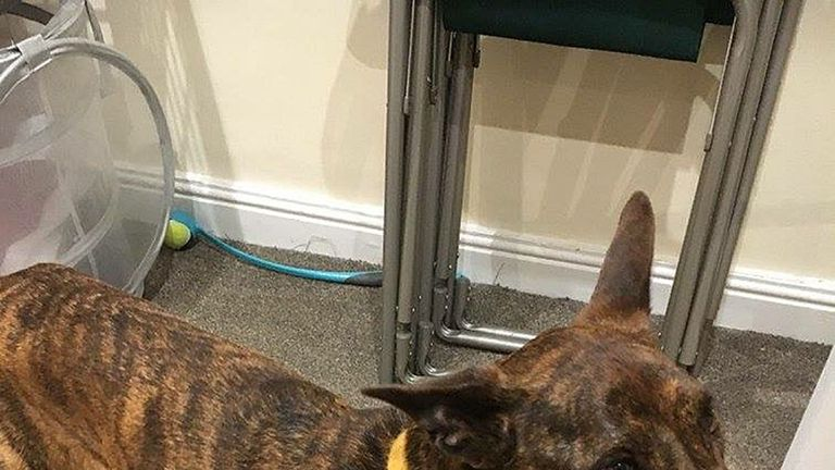 Taba only suffered saw paws in her lucky escape