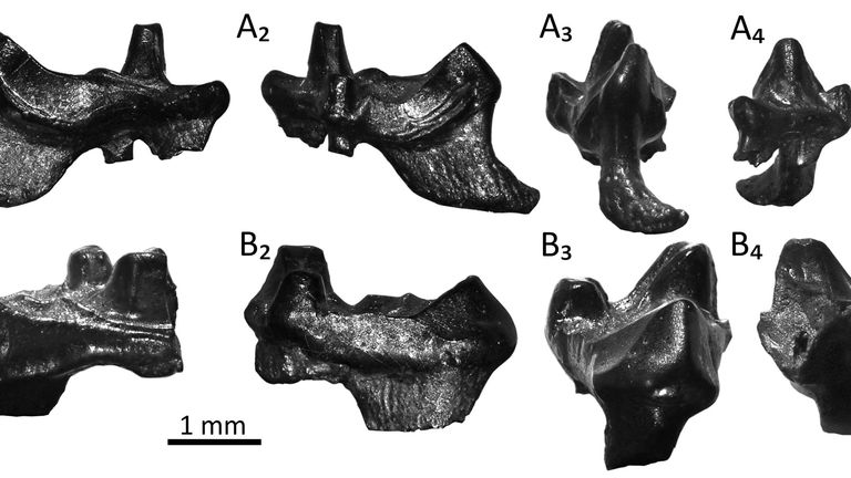 The samples of the teeth can be linked to mammals on earth today