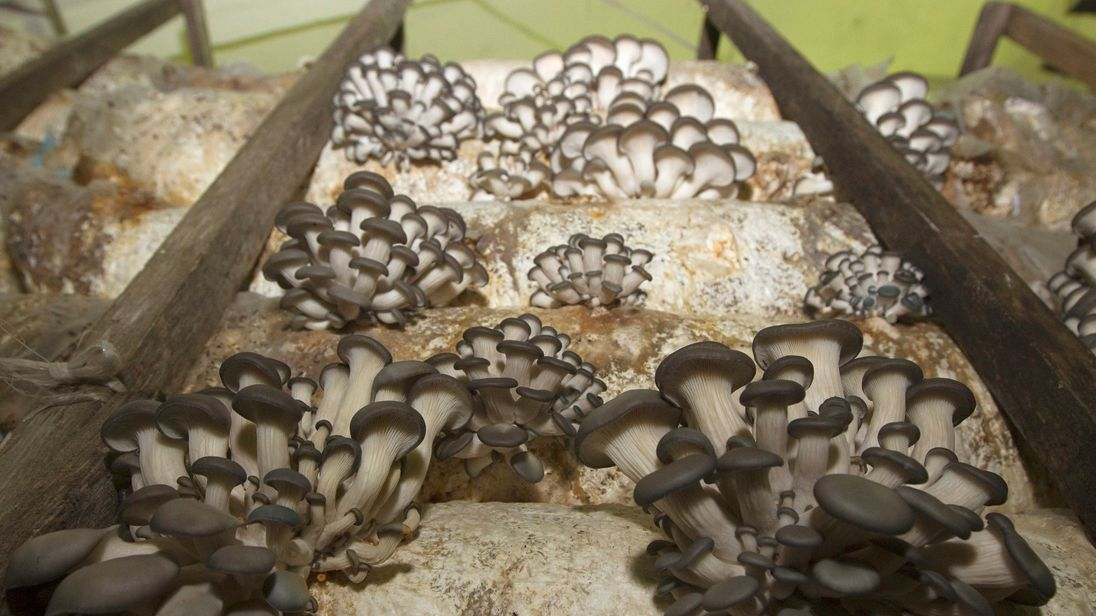 Mushrooms in Belarus
