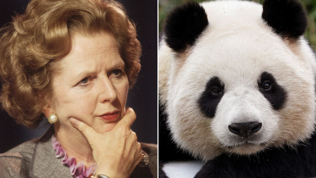 Thatcher refused to share flight with panda Skynews-panda-thatcher_4193883