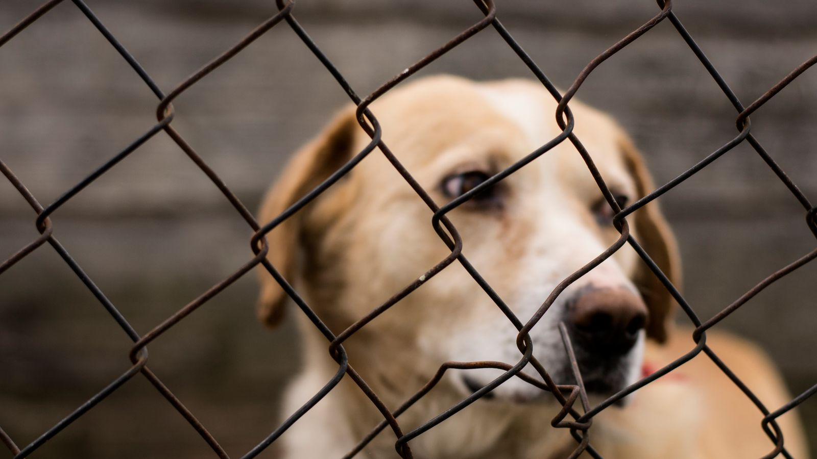 Government draft tougher animal cruelty laws after sentience row