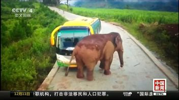 The elephant attacked a bus and a truck on the same stretch of road