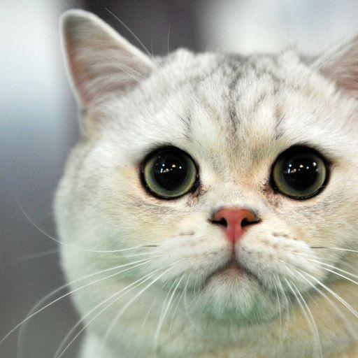 'Croydon cat killer' aims to 'horrify' people, animal charity says