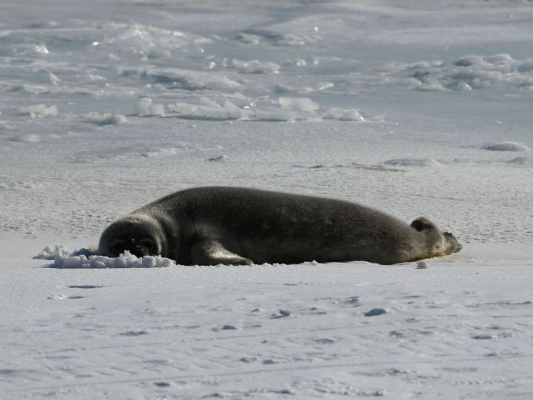 The area is home to seals, killer whales and mink whales