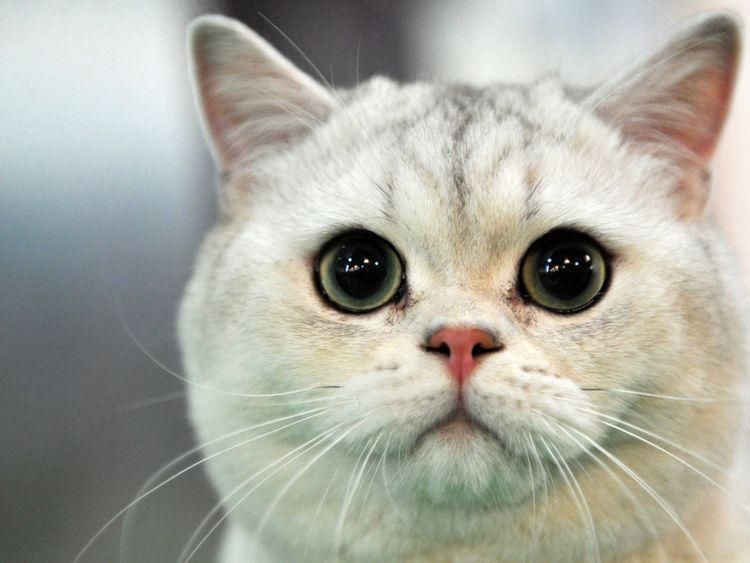 Rescue Cats Aylesbury