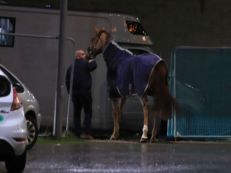 Horses inside the car park at the time have been escorted to safety