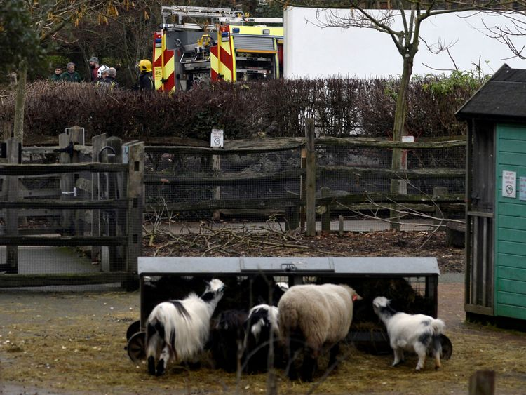 Firefighters stand near an animal enclosure at London Zoo following a fire which broke out at a shop and cafe