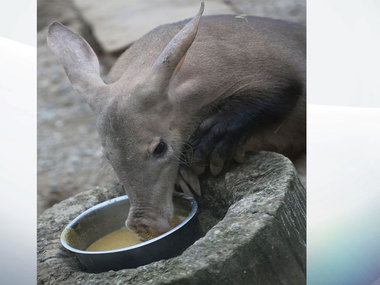 Fire at London Zoo kills aardvark, several meerkats