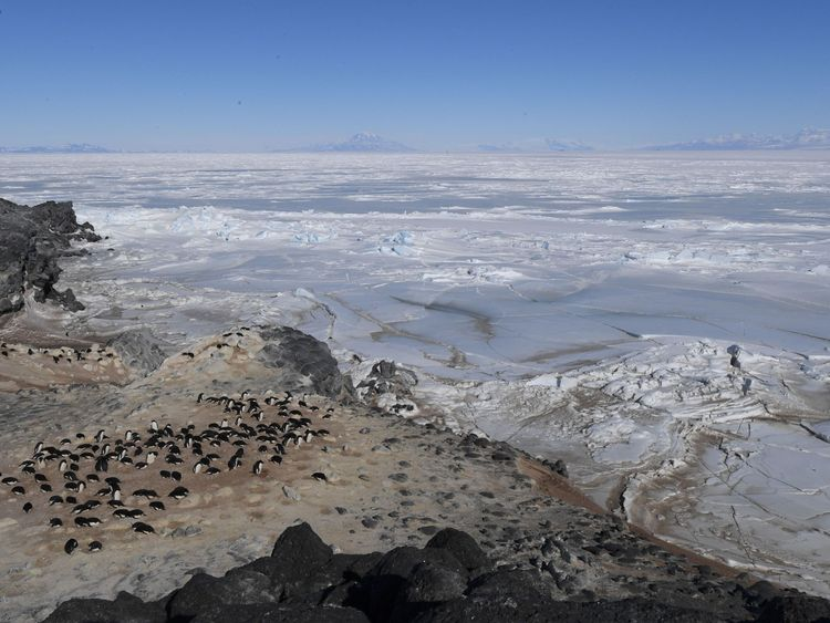 Adelie and emperor penguins call the Ross Sea area home