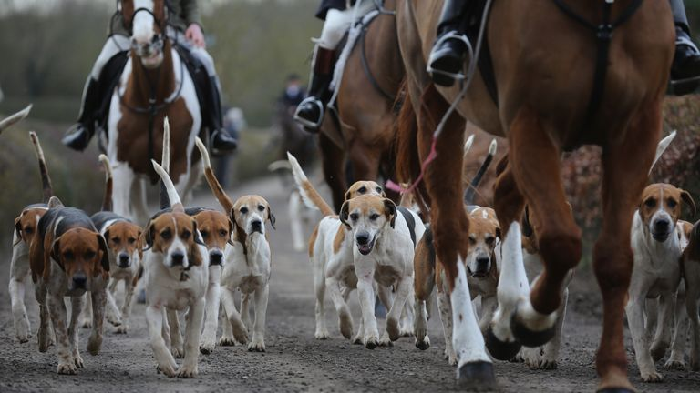 Theresa May to U-turn on fox hunting free vote