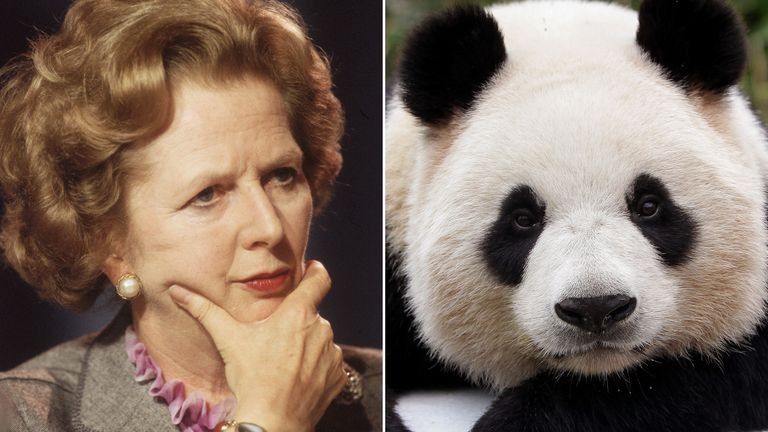 A panda could have been an unlikely guest aboard Margaret Thatcher's Concorde for a flight to Washington