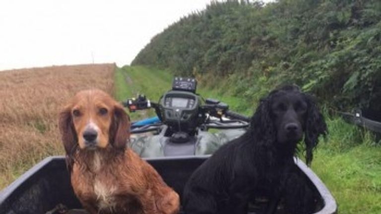 Two of the three dogs stolen from the kennels in North Molton