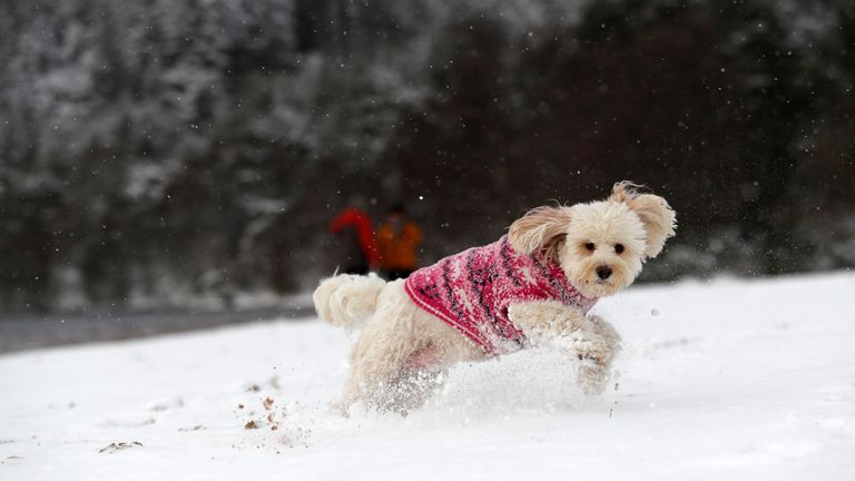 A dog plays on the snowy shoreline of Loch Morlich near Aviemore, Scotland
