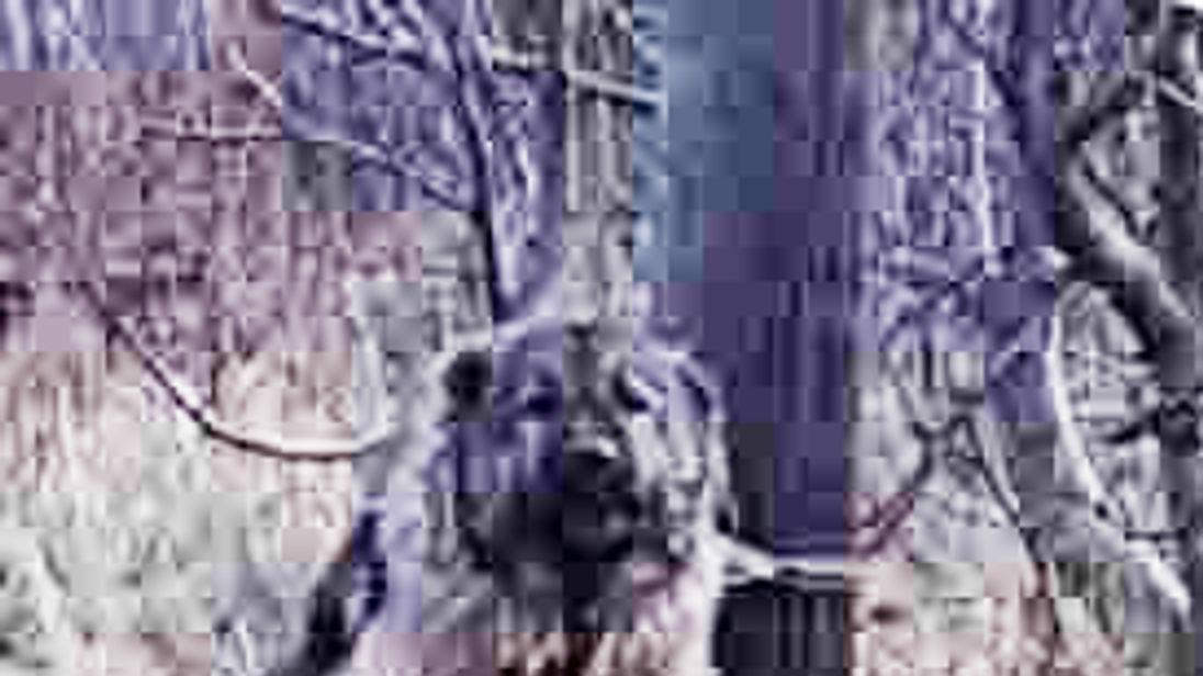 Police Shoot Dog Dead in Hartlepool