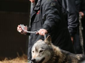 Torak is led back to his trailer before being taken back home